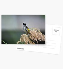 Australian Honeyeater Bird Postcards