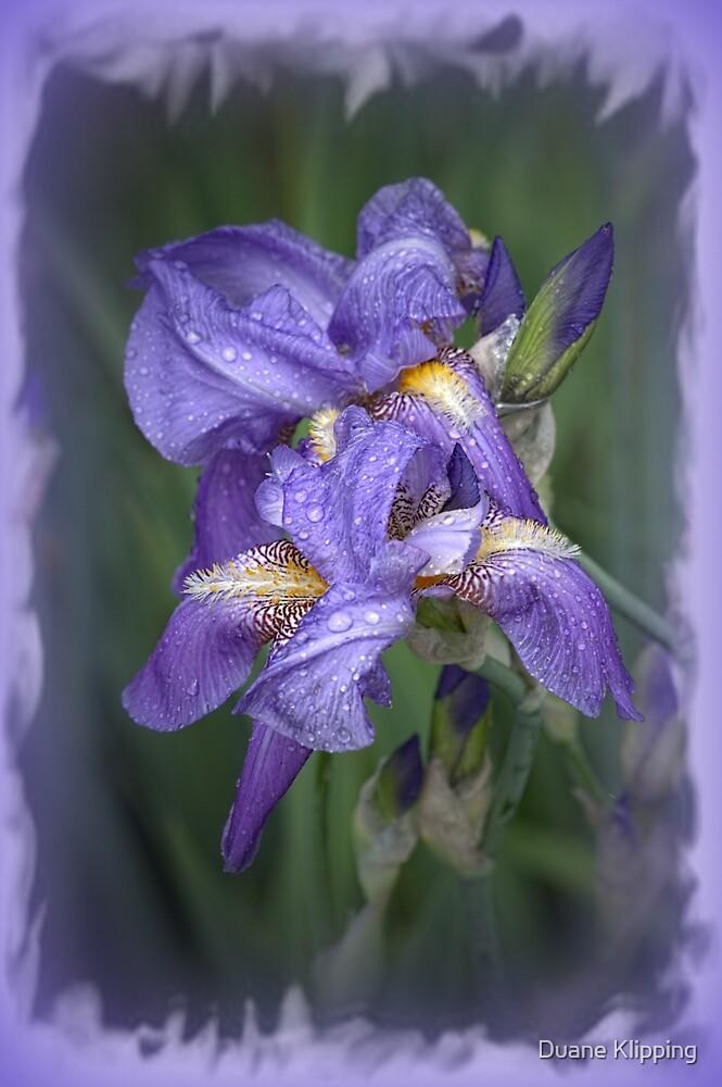 Wet Purple by Duane Klipping