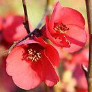 Red Cherry Blossom by Sophia Covington