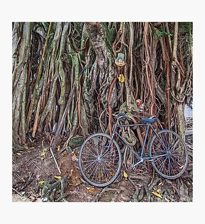 Bicycle and Tree Photographic Print