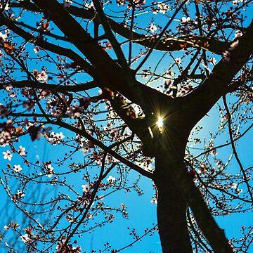 Glimmer of Spring by DaniMorin519