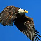 Free as a Bird! by jozi1