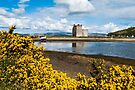 Lochranza Castle - The Isle of Arran by Stephen Miller