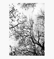 Natural neurons Photographic Print