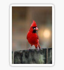 Male Northern Cardinal Sticker