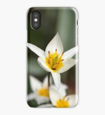 The wild tulip Tulipa turkestanica from Central Asia. iPhone Case/Skin