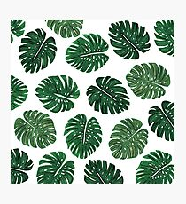 Tropical Hand Painted Swiss Cheese Plant Leaves Photographic Print