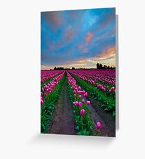 Sunset Pink Greeting Card