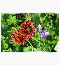 Beautiful colorful red flowers in the garden. Poster