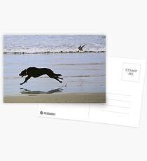 Bird And Dog Race Postcards