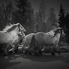 the queen's horses by Dorit Fuhg