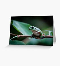 Australian green tree frog Greeting Card