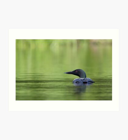 Cool and green and shady - Common loon Art Print