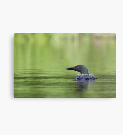 Cool and green and shady - Common loon Metal Print