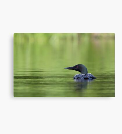 Cool and green and shady - Common loon Canvas Print