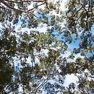 Sky Through Karri Trees by Jack Bridges