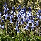 Bluebells by Gary Gurr