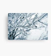 Ice on Tree Branch Canvas Print