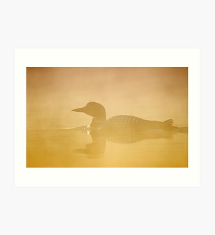 In a golden mist - Common loon Art Print