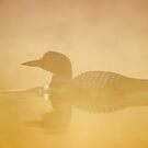 In a golden mist - Common loon by Jim Cumming