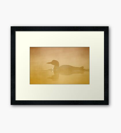 In a golden mist - Common loon Framed Print