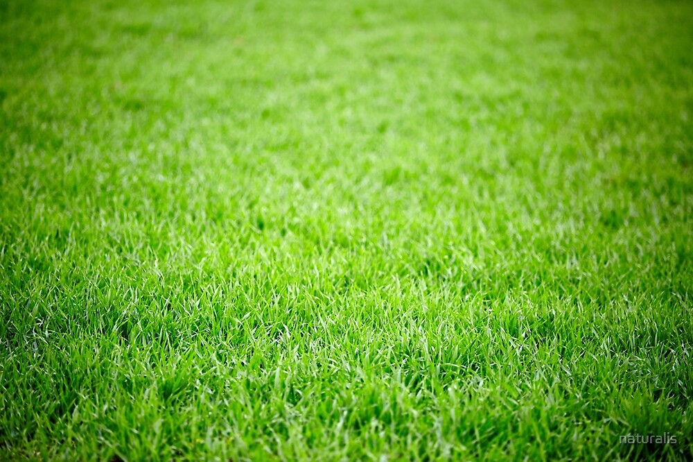 """Green Grass Field Background"" By Naturalis"