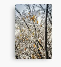 Frozen Tree  Canvas Print