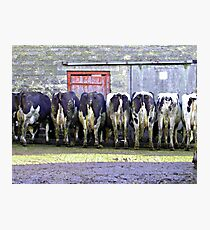 Bare Behinds!! Photographic Print