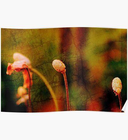 Floral metamorphosis Poster