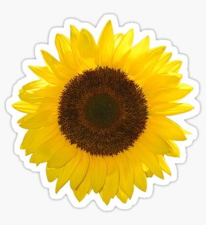 Sunflower 2 Sticker