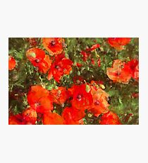 Poppies in a Meadow Photographic Print