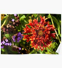 Beautiful colorful red flower in the garden. Poster