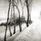 winter wonderland by Dorit Fuhg