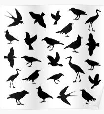 bird image on white background,vector illustration Poster