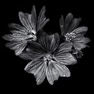 Backyard Flowers In Black And White 11 After The Storm by learningcurveca