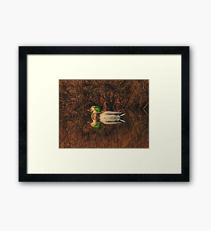 Early Morning Ducks Framed Print