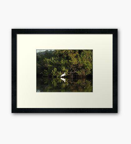 Egret with stick Framed Print