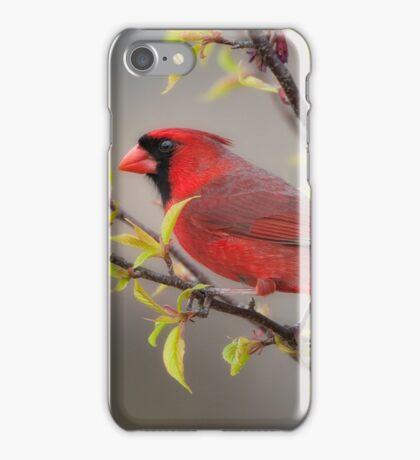 Cardinal in Spring iPhone Case/Skin