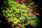 Bush in Bloom by Yannik Hay