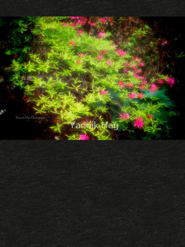 Bush in Bloom by Photograph2u