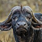 African Buffalo by Jan Fijolek