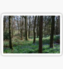 Bluebells Among the Trees Sticker