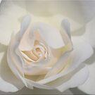 Sensual Sensibility by Chet  King