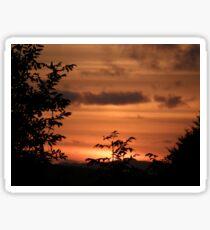 Sunset Plant Derry Ireland Sticker