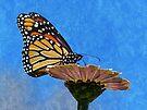 Monarch by FrankieCat