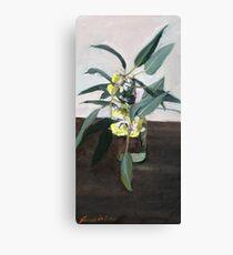Yellow eucalyptus blossom      Canvas Print