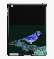 Beautiful Blue Jay Art Print iPad Case/Skin