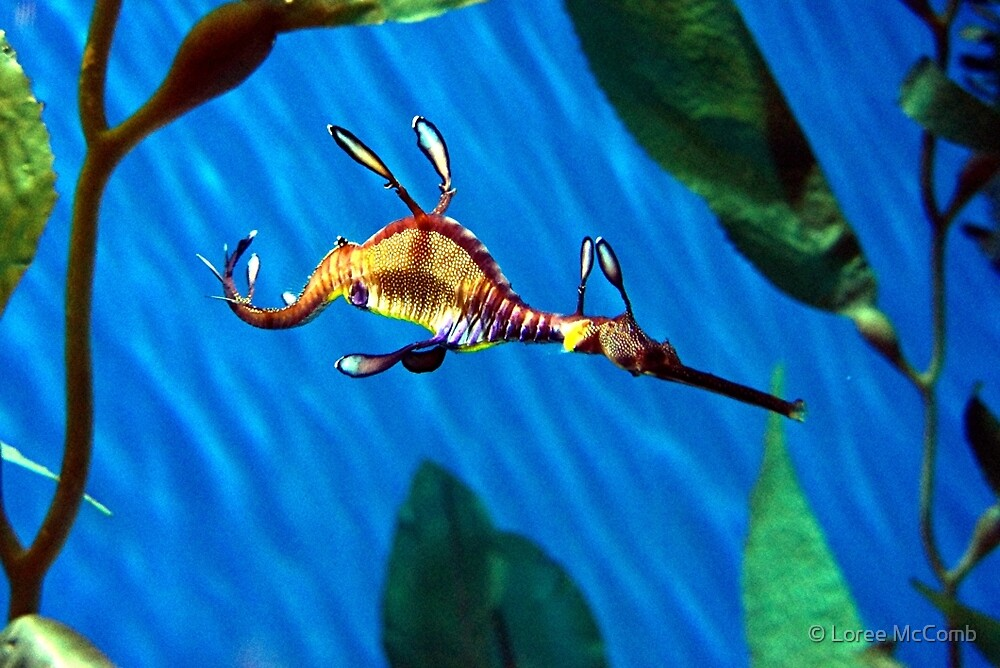 Sea Dragon by © Loree McComb