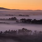 Yarra Valley Dawn by Timo Balk