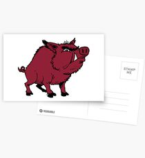 Razorback Hog Postcards